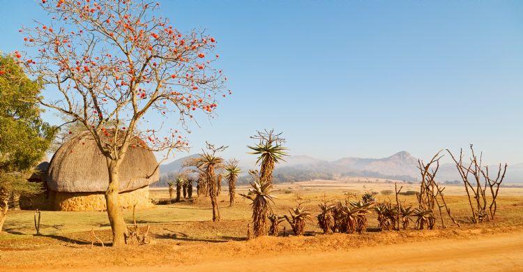 Réserve de Mlilwane au Swaziland