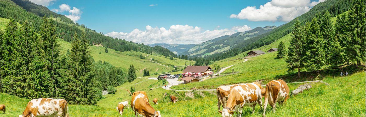 Schönangeralm dans le Tyrol